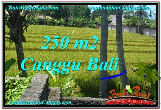FOR SALE Affordable PROPERTY 250 m2 LAND IN CANGGU TJCG207