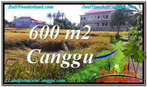 FOR SALE Magnificent PROPERTY 600 m2 LAND IN CANGGU TJCG211
