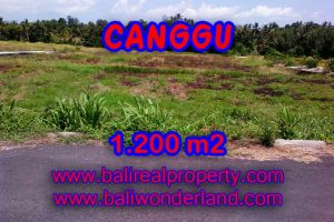 Bali Property for sale, Stunning land for sale in Canggu Bali  – 1.200 sqm @ $ 283
