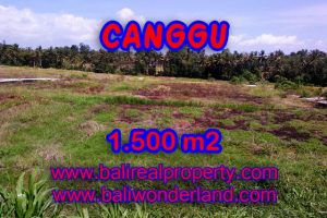 Stunning Property for sale in Bali, land for sale in Canggu Bali  – 1.500 sqm @ $ 283