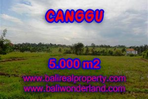 Exotic LAND FOR SALE IN CANGGU Bali, rice fields view in Canggu Babakan– TJCG132