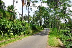 Land for sale in Ubud Bali 3.000 m2 with Rice Paddy and River View