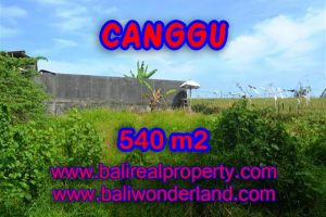Land in Canggu for sale, Amazing view in Canggu Bali – TJCG131