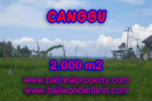 Land in Canggu Bali for sale, Outstanding view in Canggu Cemagi – TJCG140