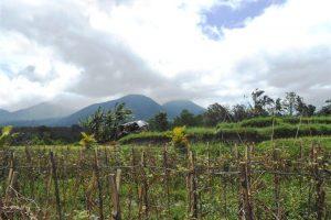 Tabanan Land for sale Mountain view  in Tabanan Baturiti Bali