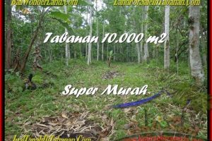 Magnificent PROPERTY 10.000 m2 LAND SALE IN TABANAN BALI TJTB177