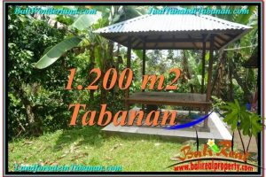 Magnificent PROPERTY LAND IN TABANAN FOR SALE TJTB294