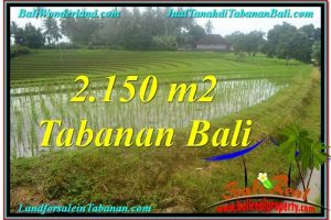Exotic PROPERTY LAND FOR SALE IN Tabanan Selemadeg BALI TJTB312