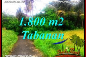 Beautiful PROPERTY LAND FOR SALE IN Tabanan Selemadeg BALI TJTB357