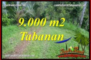 Exotic PROPERTY LAND FOR SALE IN Tabanan Selemadeg Timur BALI TJTB364