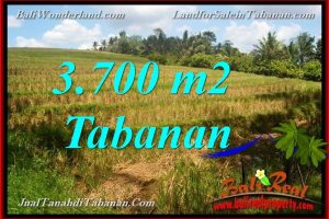 Exotic PROPERTY 3,700 m2 LAND IN TABANAN FOR SALE TJTB377