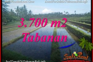 Exotic LAND FOR SALE IN TABANAN BALI TJTB388