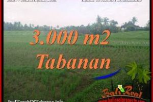 FOR SALE Affordable 3,000 m2 LAND IN TABANAN SELEMADEG BALI TJTB389