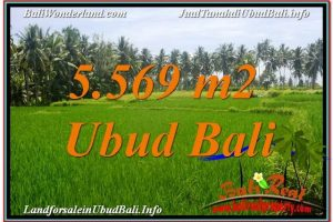 Exotic PROPERTY 5,569 m2 LAND IN Sentral / Ubud Center BALI FOR SALE TJUB642