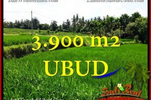 FOR SALE Magnificent 3,900 m2 LAND IN UBUD TJUB658
