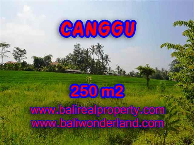 Land in Bali for sale, fantastic view in Canggu Bali – TJCG135