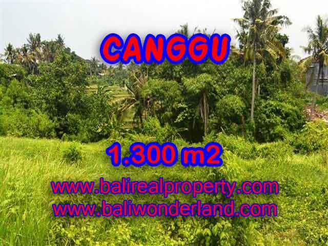 Fantastic Land for sale in Bali, rice fields view in Canggu Batu bolong– TJCG136