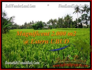 Affordable PROPERTY UBUD BALI 2,000 m2 LAND FOR SALE TJUB485