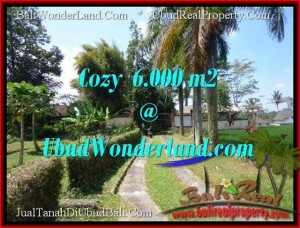 Affordable PROPERTY 6,000 m2 LAND SALE IN UBUD BALI TJUB507