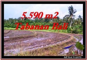 Exotic PROPERTY 5,590 m2 LAND FOR SALE IN Tabanan Selemadeg TJTB257