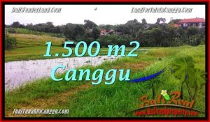 Magnificent LAND IN Canggu Batu Bolong BALI FOR SALE TJCG198