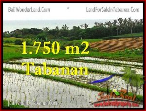 Beautiful PROPERTY 1,775 m2 LAND IN Tabanan Selemadeg FOR SALE TJTB264