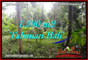 Affordable 1,500 m2 LAND FOR SALE IN TABANAN BALI TJTB279