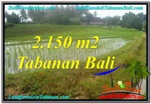FOR SALE Magnificent 2,150 m2 LAND IN Tabanan Selemadeg BALI TJTB312