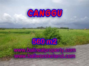 Exotic 560 m2 LAND IN CANGGU FOR SALE TJCG138