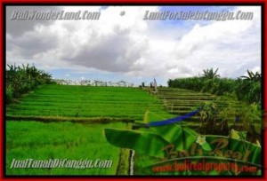Magnificent PROPERTY 290 m2 LAND IN CANGGU BALI FOR SALE TJCG141