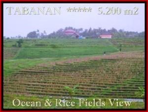 Beautiful 5.200 m2 LAND SALE IN TABANAN BALI TJTB185