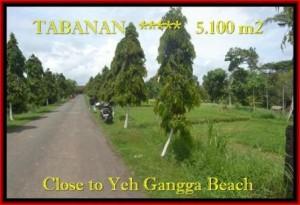 Magnificent TABANAN BALI 5.100 m2 LAND FOR SALE TJTB186
