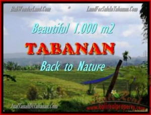Magnificent PROPERTY LAND FOR SALE IN TABANAN TJTB155