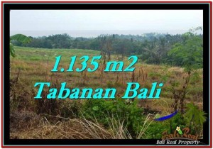 FOR SALE Affordable 1,135 m2 LAND IN TABANAN TJTB253