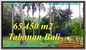 Affordable PROPERTY TABANAN BALI 65,450 m2 LAND FOR SALE TJTB290
