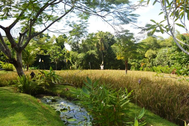 Land for sale in Canggu