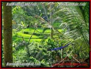 LAND IN Ubud Tegalalang BALI FOR SALE TJUB495