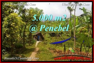 FOR SALE Affordable PROPERTY 5,000 m2 LAND IN TABANAN BALI TJTB215