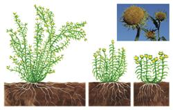 wildplants2