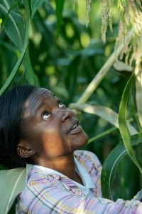 Perennial Sorghum Land Institute Scientist Pheonah Nabukalu