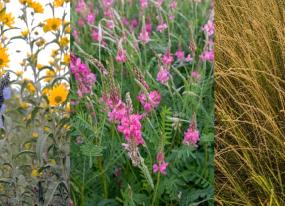 Perennial Grain Species border crops