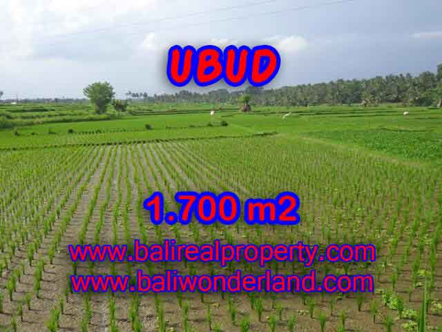 Amazing Land in Bali for sale in Ubud Center Bali – TJUB398