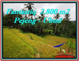 Exotic PROPERTY 2,800 m2 LAND SALE IN UBUD BALI TJUB521