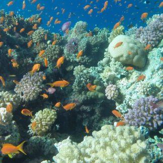 экскурсия на погружение с аквалангом в заповеднике Рас-Мухаммеда