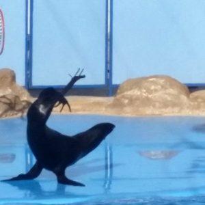 Ausflug zum Delphinarium von Hurghada