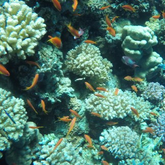 Excursion Diving Tiran from Sharm El Sheikh: photo of corals and fish near Tiran Island