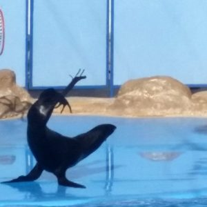 Excursion to the dolphinarium from Hurghada: a show of marine animals