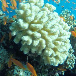 морски излети у Шарм Ел Шеику
