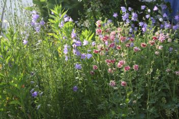 Blumen-Kräuterbeet