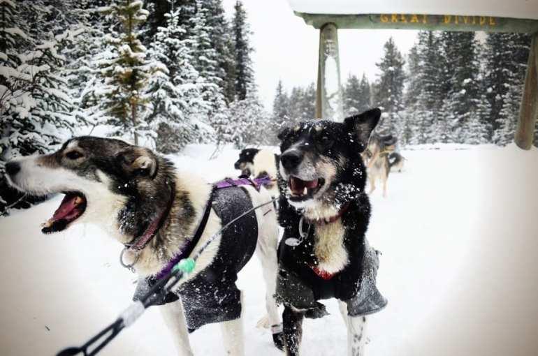 Kingmik Dogsled Tours